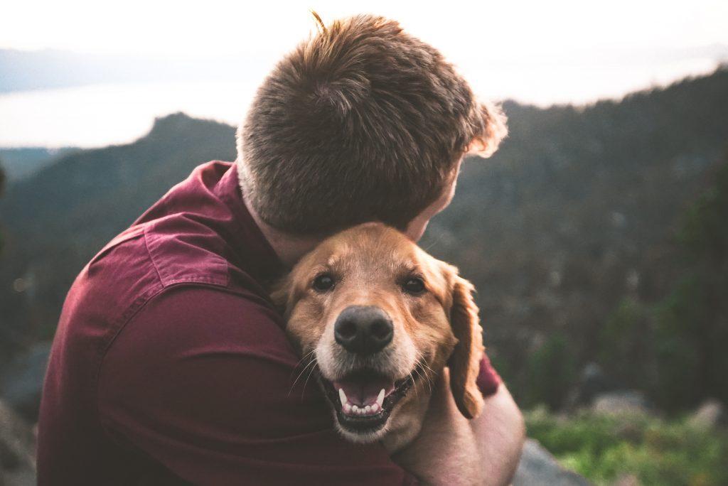 jak bawić się z psem zaufanie