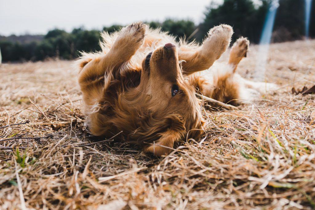 jak bawić się z psem wychowanie