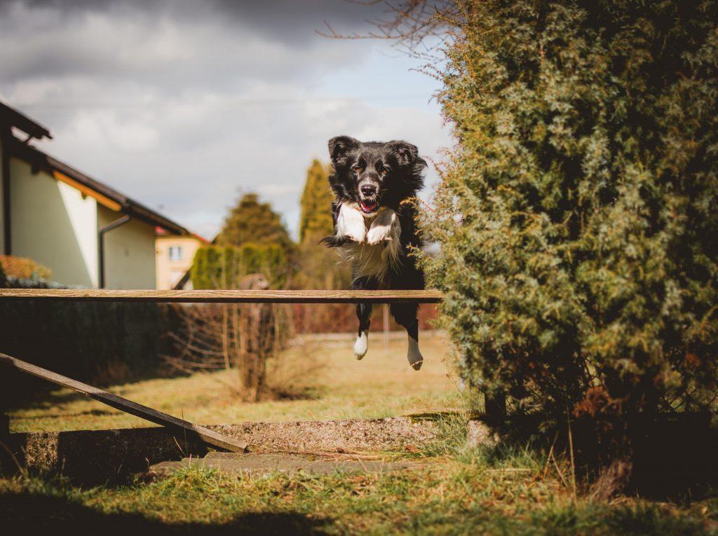 zabawa z psem to przyjemność