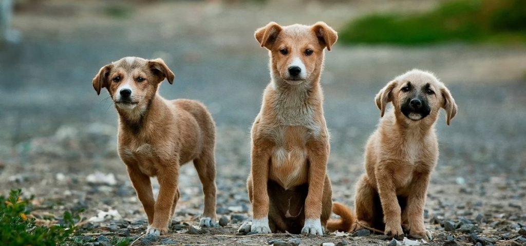behawiorysta dla psa