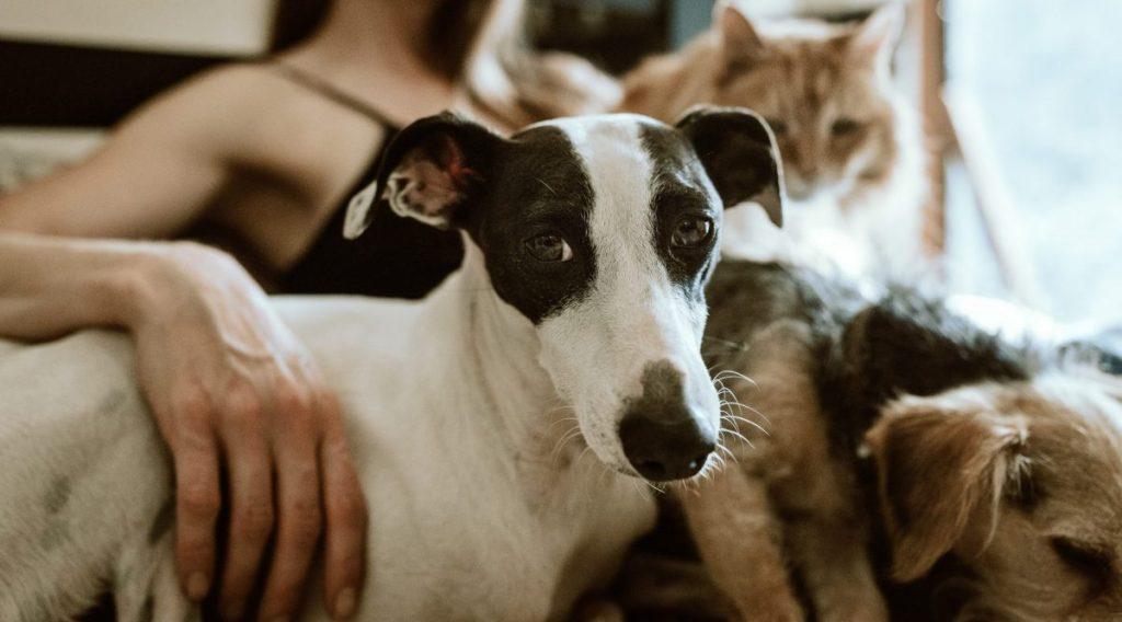 jak wybrać behawiorystę dla psa kto to