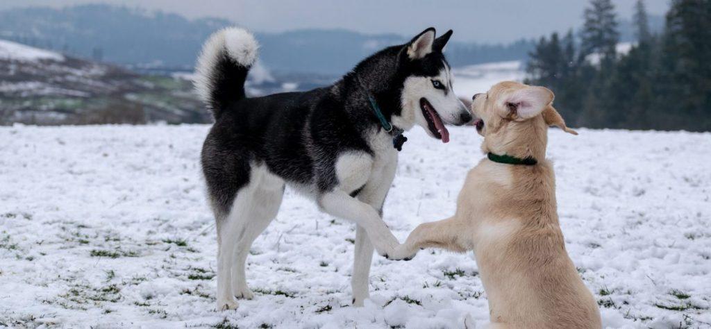 dwa psy problemy