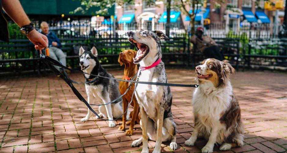 jak wybrać behawiorystę dla psa