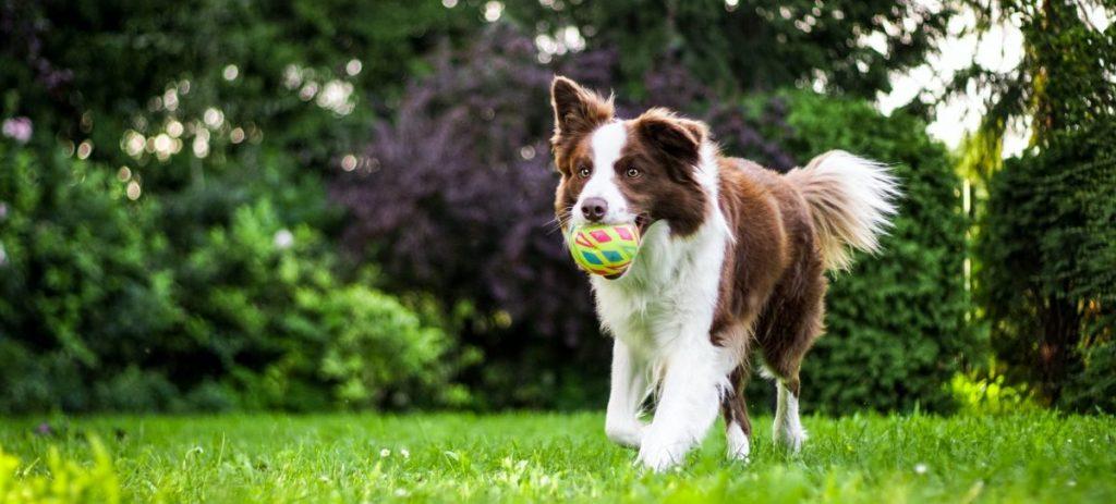 pies niszczy zabawki