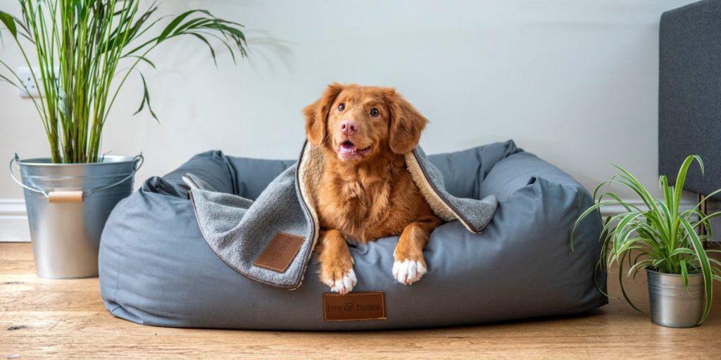 zabawki dla psa czemu niszczy