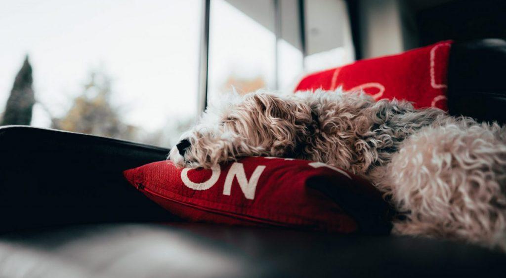 pies w domu najlepiej