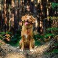 sposoby na kleszcze u psa
