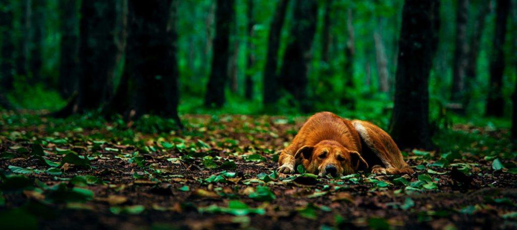 ochrona przed kleszczami dla psa
