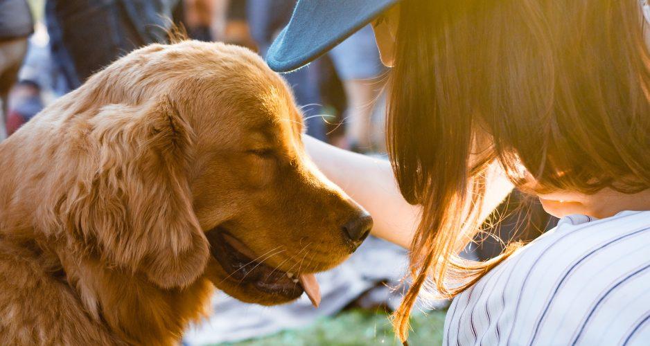 traktowanie psa jak dziecko
