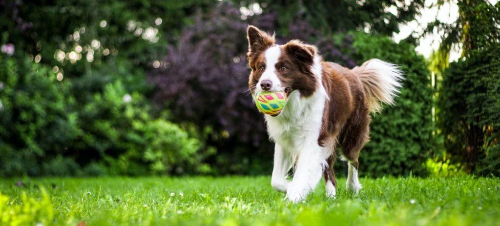 badania profilaktyczne psa