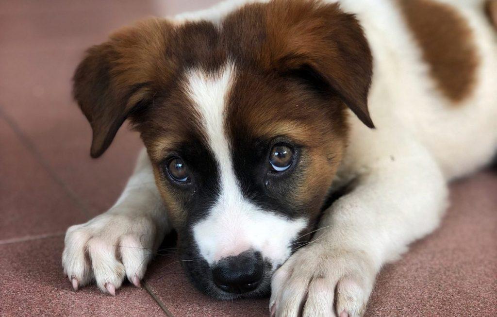 choroby tarczycy u psa