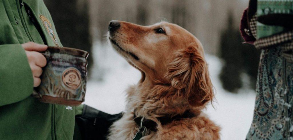 uczłowieczanie psa